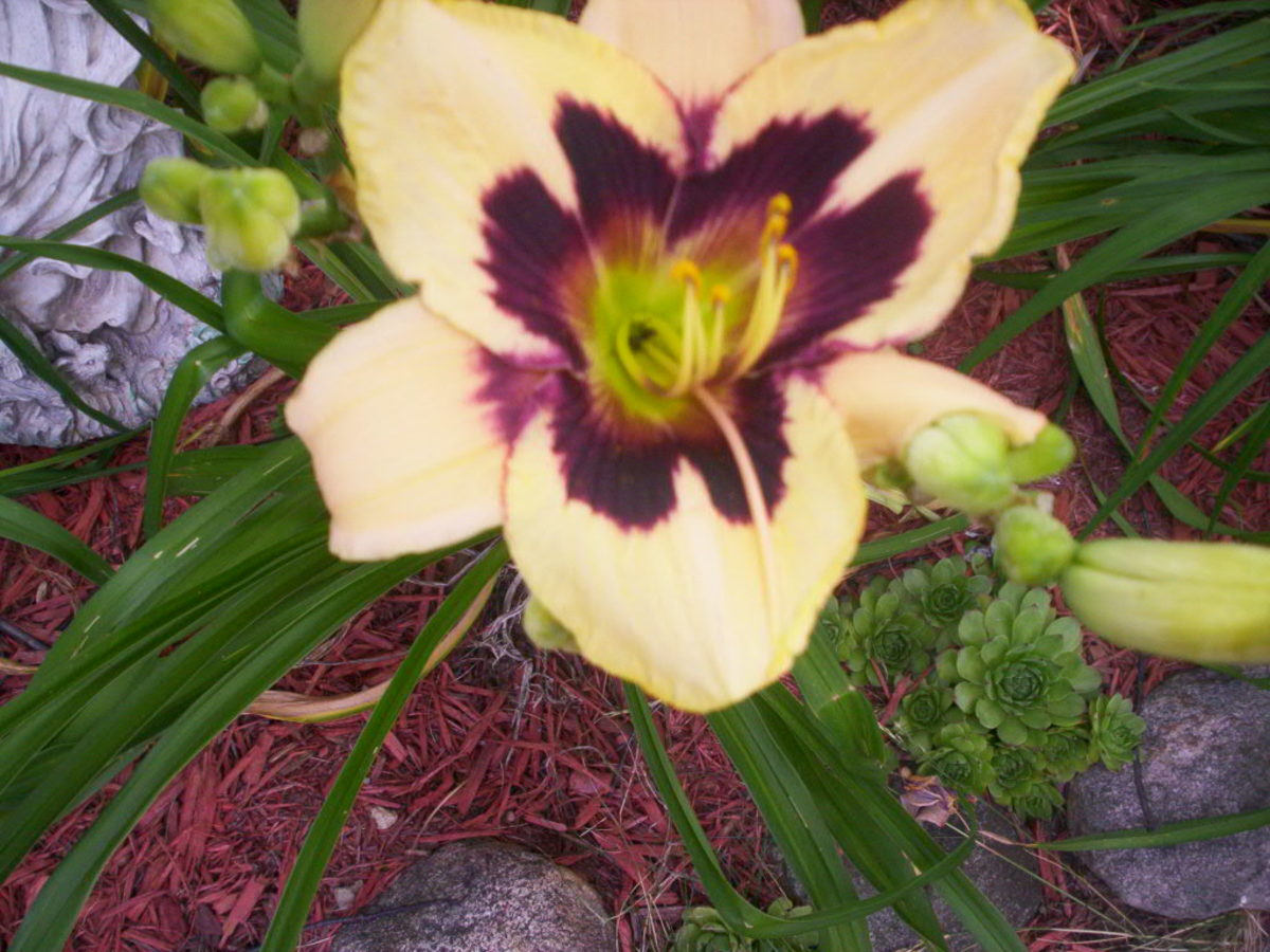 The Differences Between Perennial Plants and Annuals