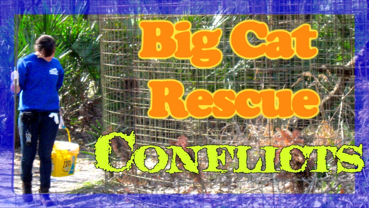 Important Facts You Should Know About Big Cat Rescue of Tampa Florida