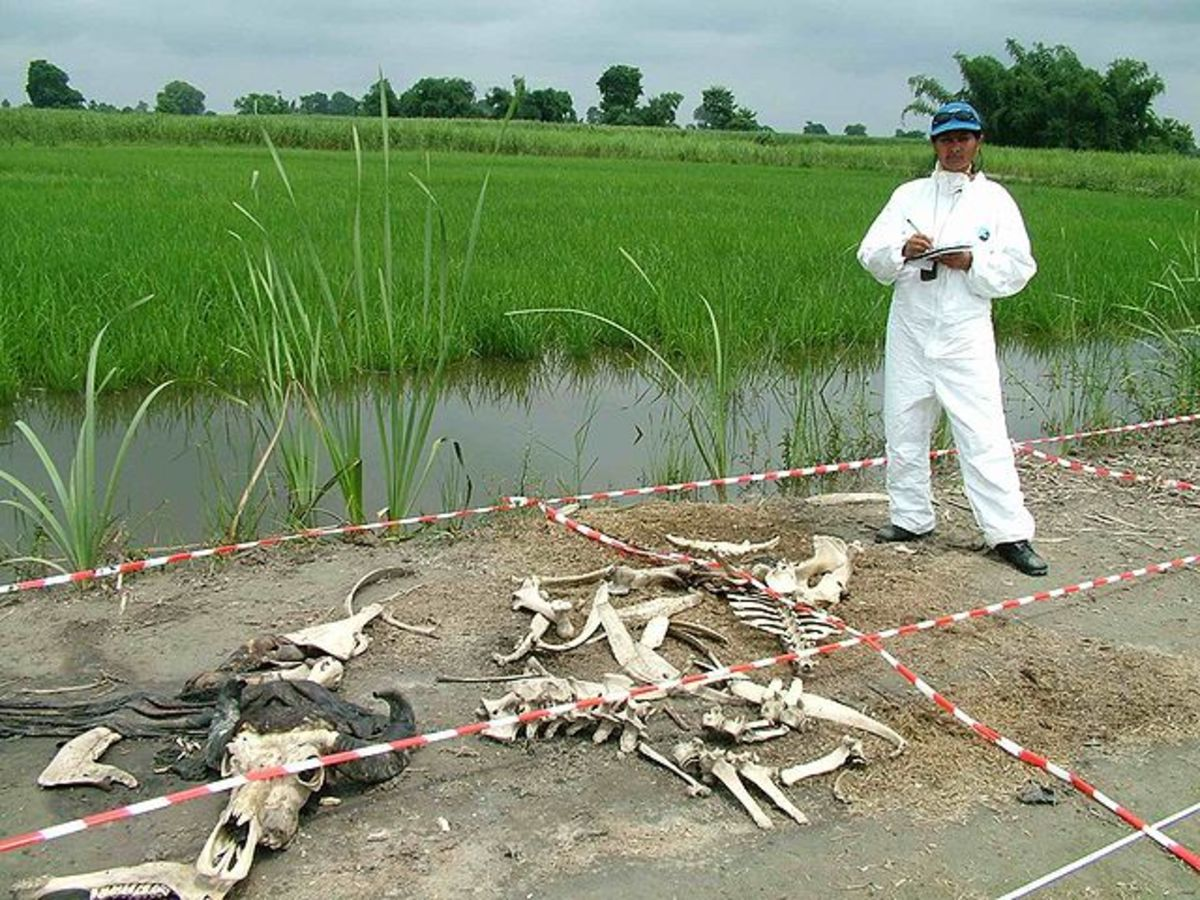 Body farms use cadavers to study the effects of the environment on human and animal bodies.