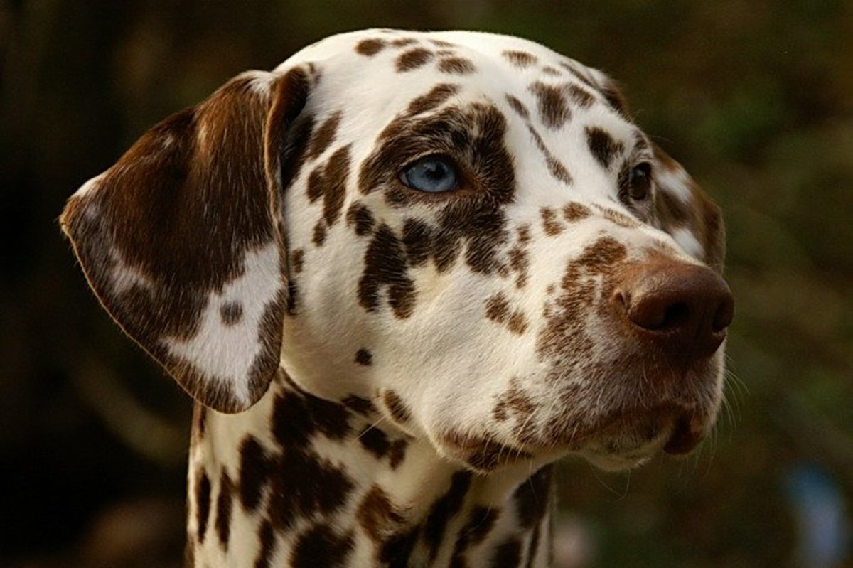 101 Dalmatians Syndrome: Media Influence on Pet Owners