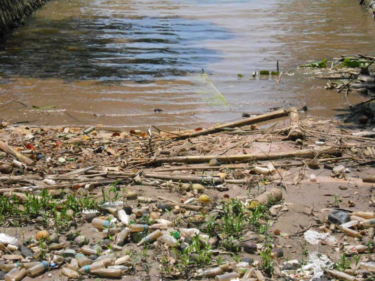 Solutions to Water Pollution—Can We Clean It Up?