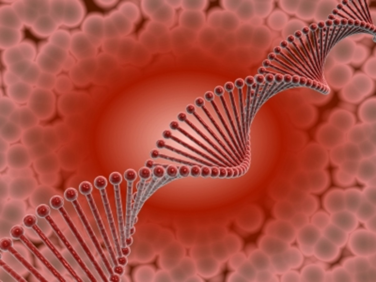 Homosexuality - Is There A Gay Gene?