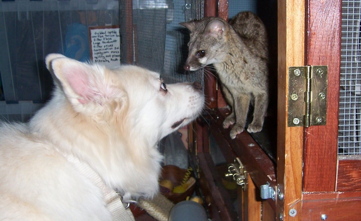 "Dog and ""wild"" animal."