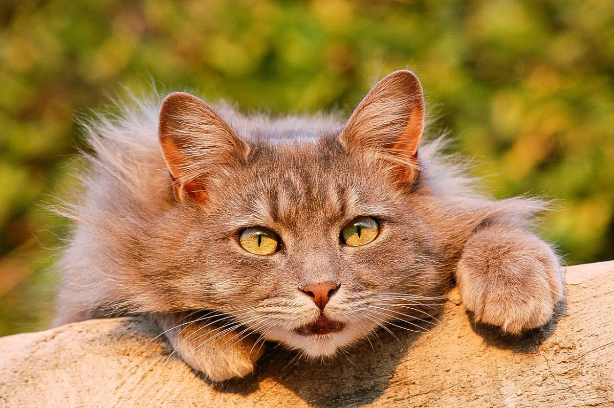 Many Internet users love cats. At least one website is trying to link viewing cat videos to fundraising for human charities.