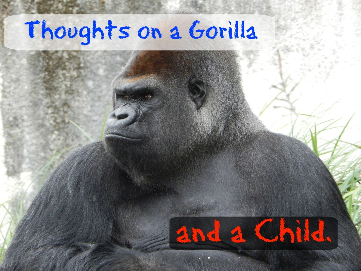 Thoughts on a Gorilla and a Child