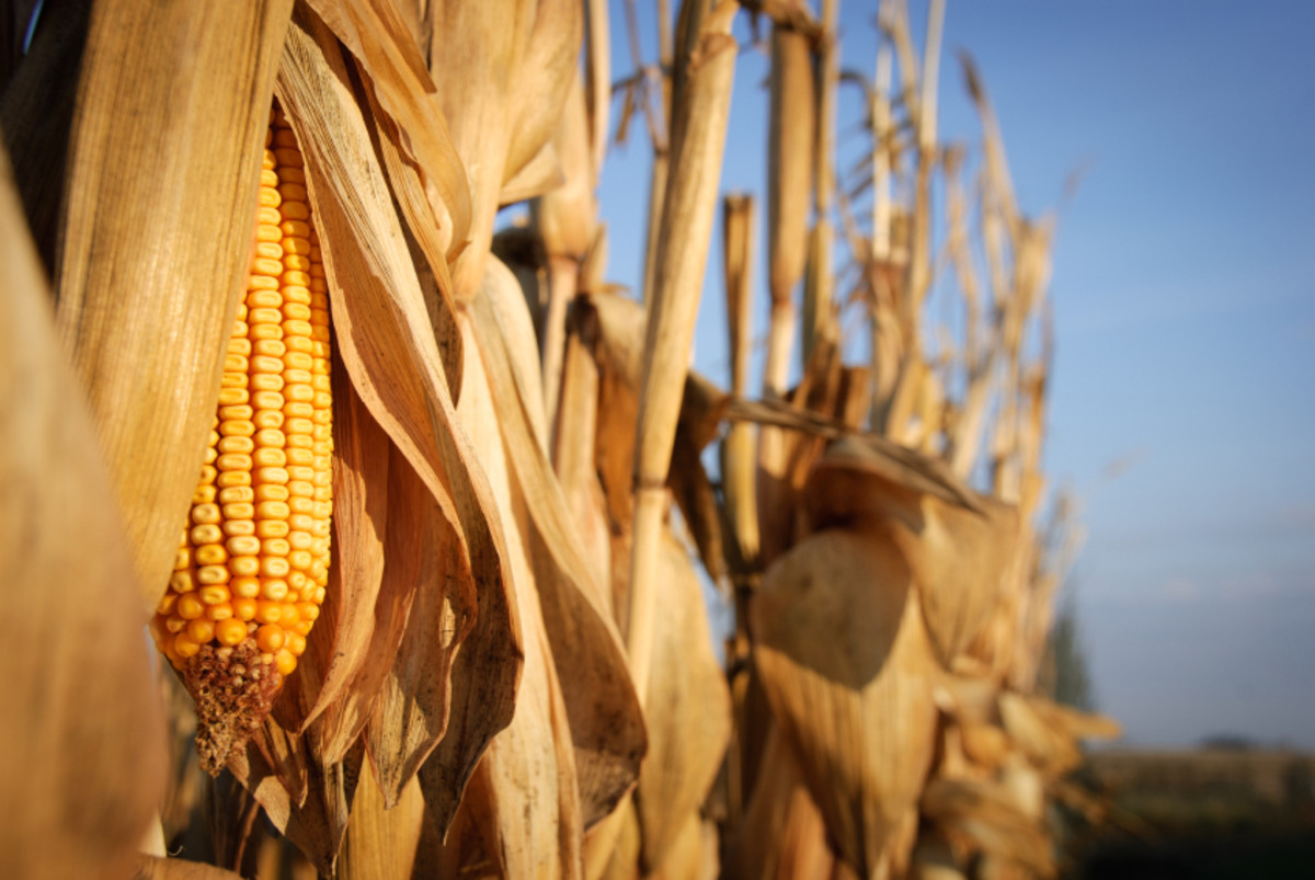 Inferiority of Corn Based Ethanol