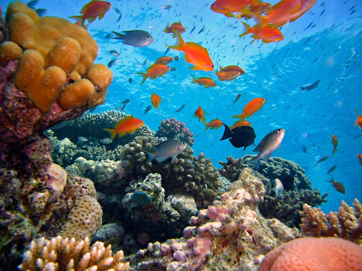 Coral Reefs are Disappearing