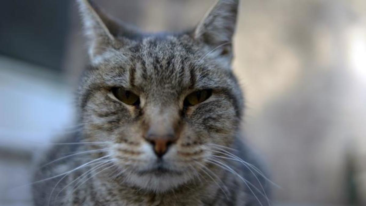 Where Have All the Cats Gone?: Serial Cat Killers of Saint Pierre La Mer and M25 Croydon