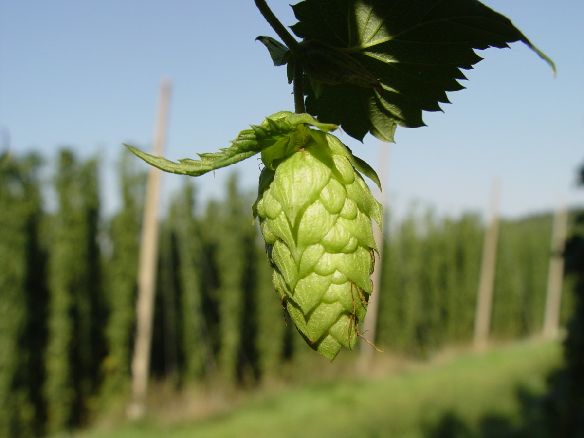 The hop, the answer to your sleep woes!