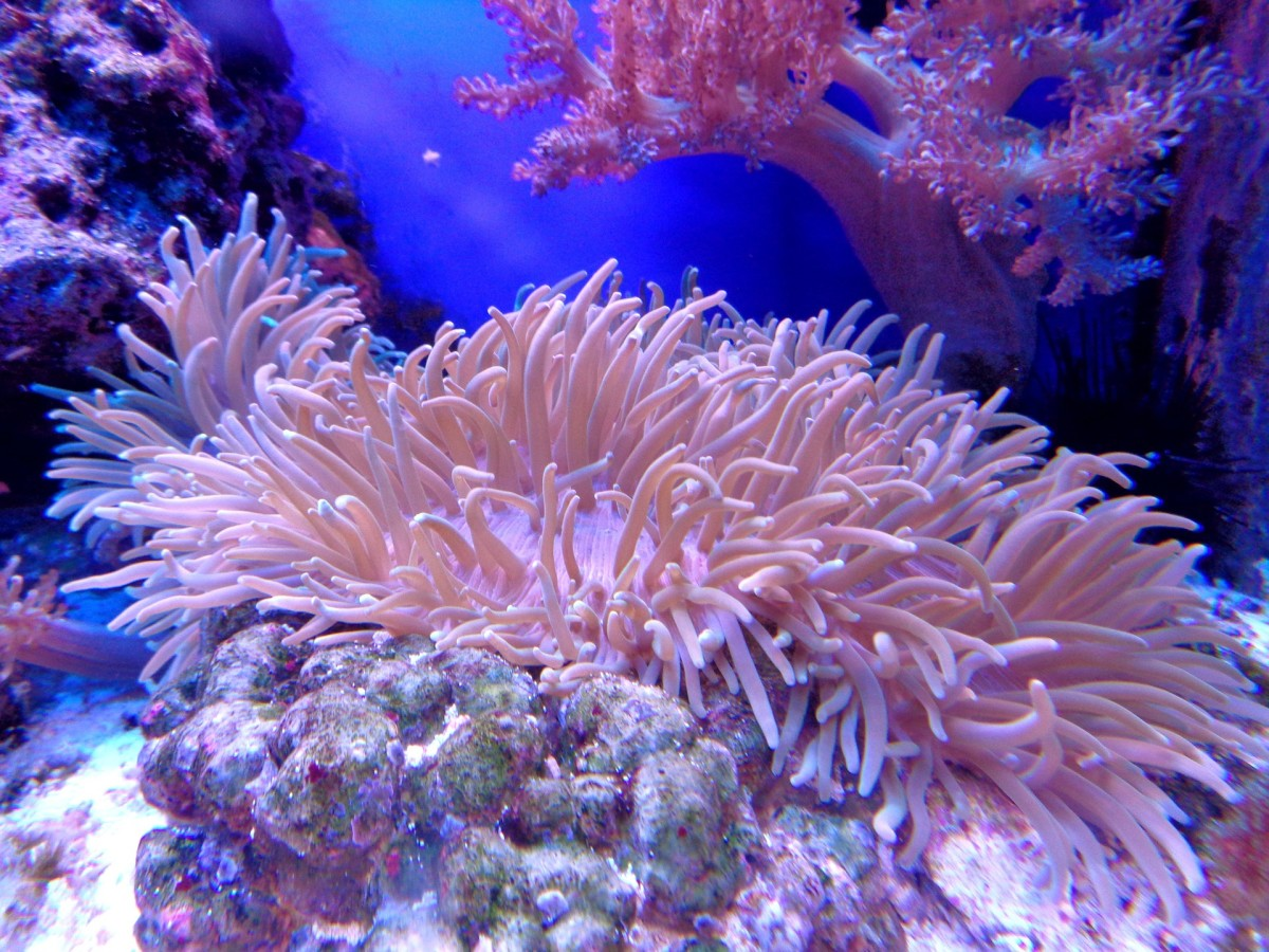 Coral reefs are living ecosystems that house around 25% of all marine life.