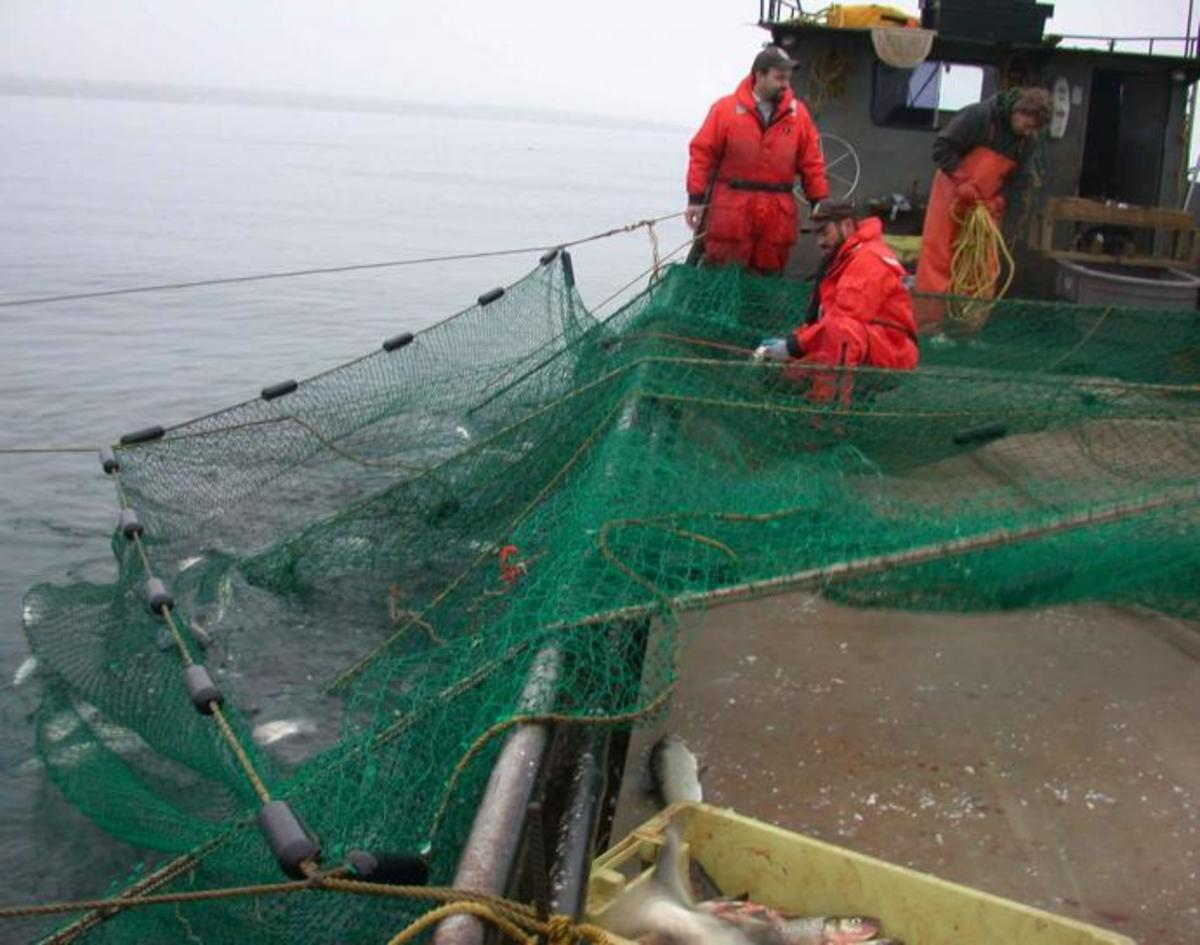 More and more fishers are hauling in empty nets.