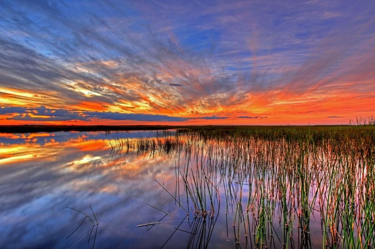 Florida's Invasive Wildlife