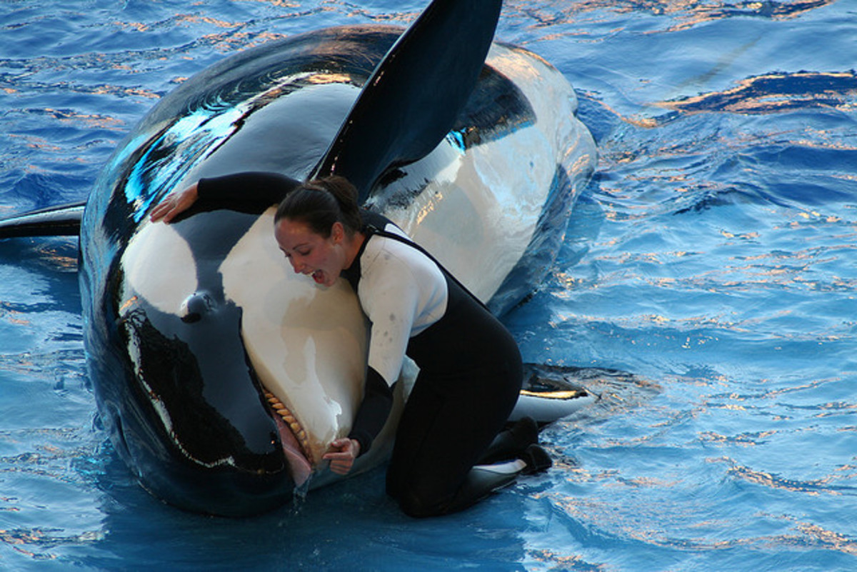 Why Blackfish is Misleading, Unoriginal, and Stupid