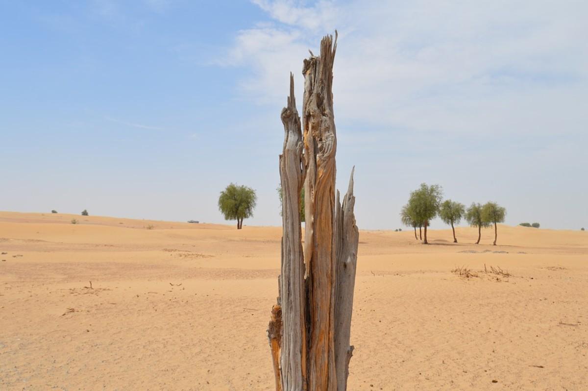 Forest Depletion and Reforestation