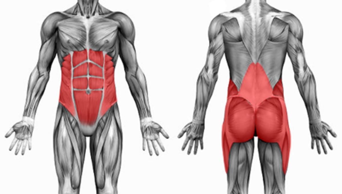 Afbeeldingsresultaat voor core muscles