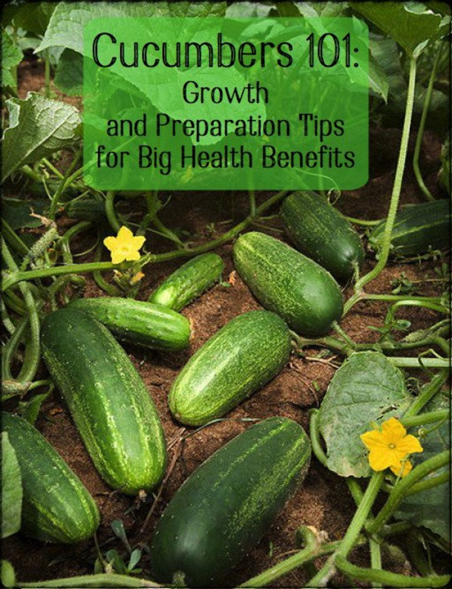 How to Grow and Process Cucumbers & Their Medicinal Benefit