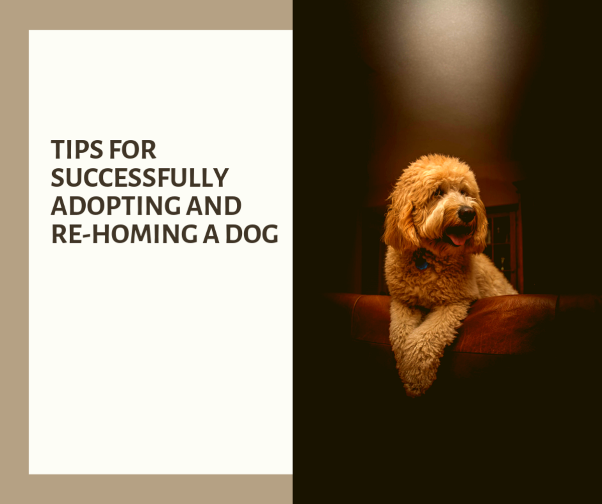Tips for Successfully Adopting and Re-Homing a Dog