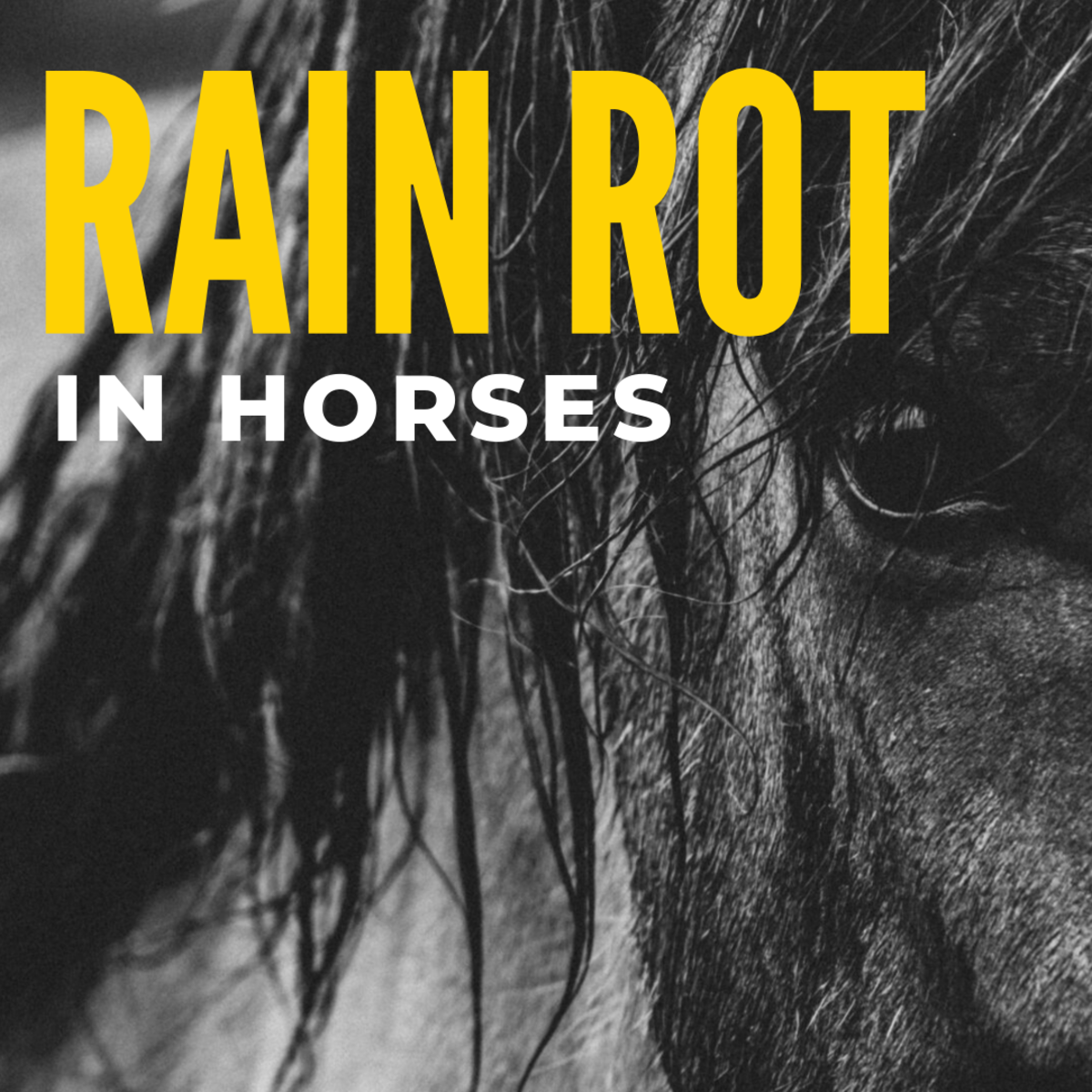 How to Manage Rain Rot in Horses: Symptoms, Treatments, and Cures