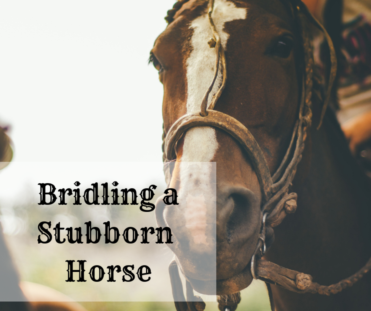 How to Train the Hard-to-Bridle Horse