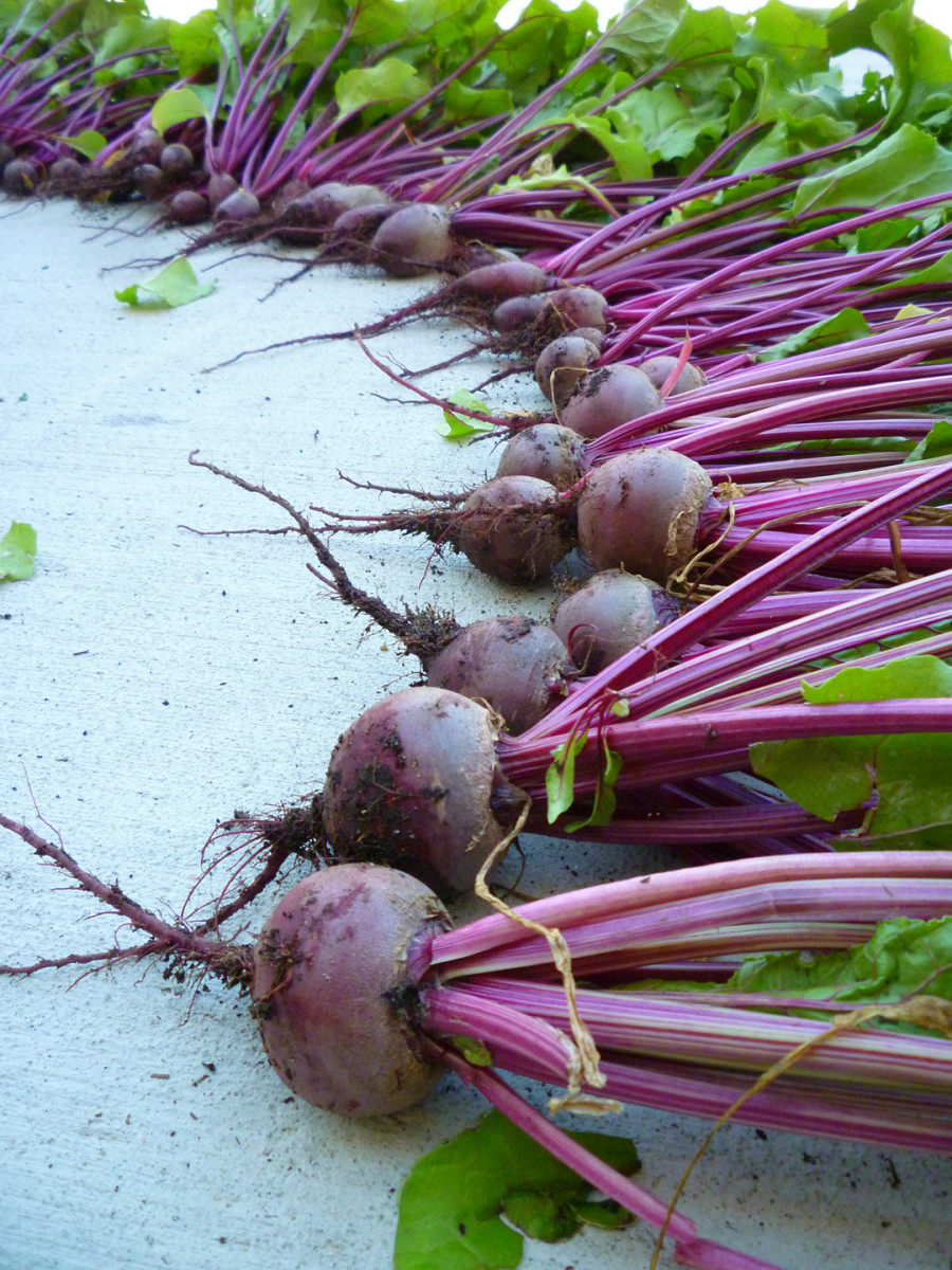 How to Grow Beets in a Container