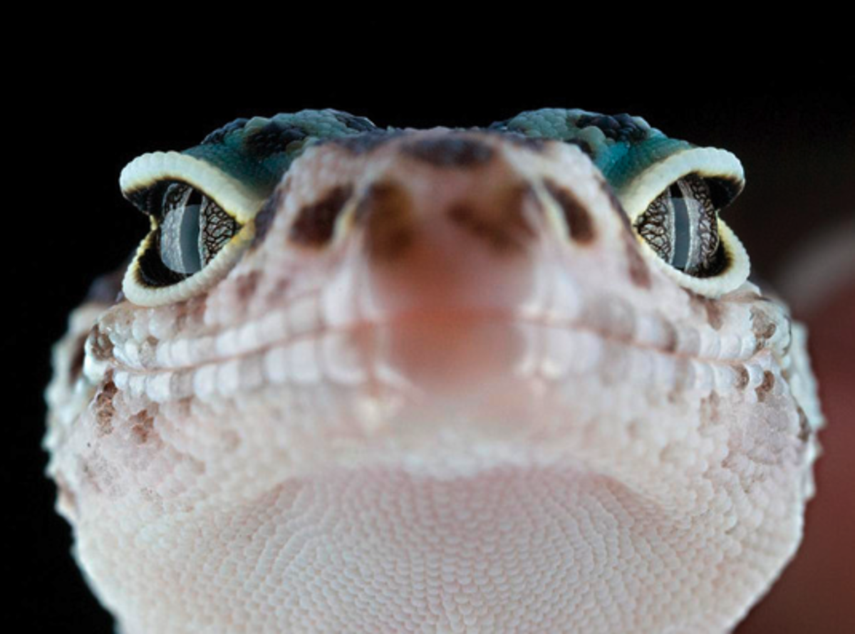 Common Reptile Questions: Snake, Lizard, and Turtle FAQ
