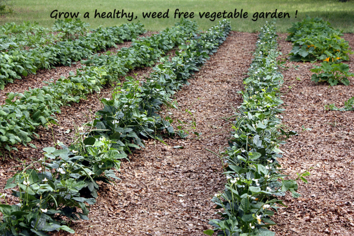 How to Grow a Successful Vegetable Garden