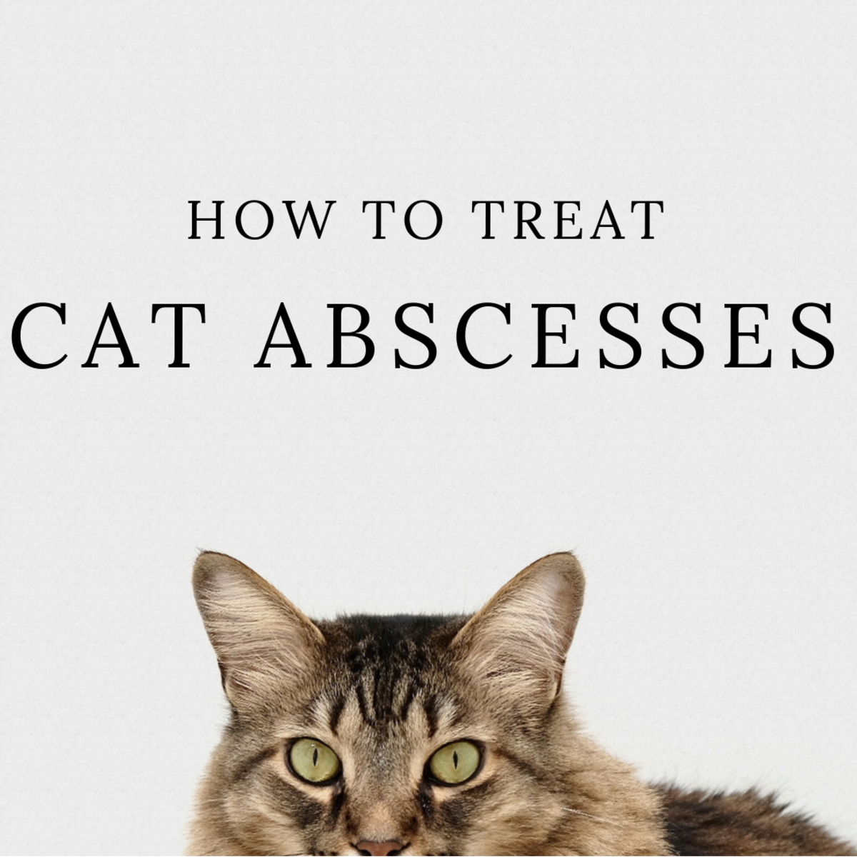 How to Treat Cat Abscesses at Home