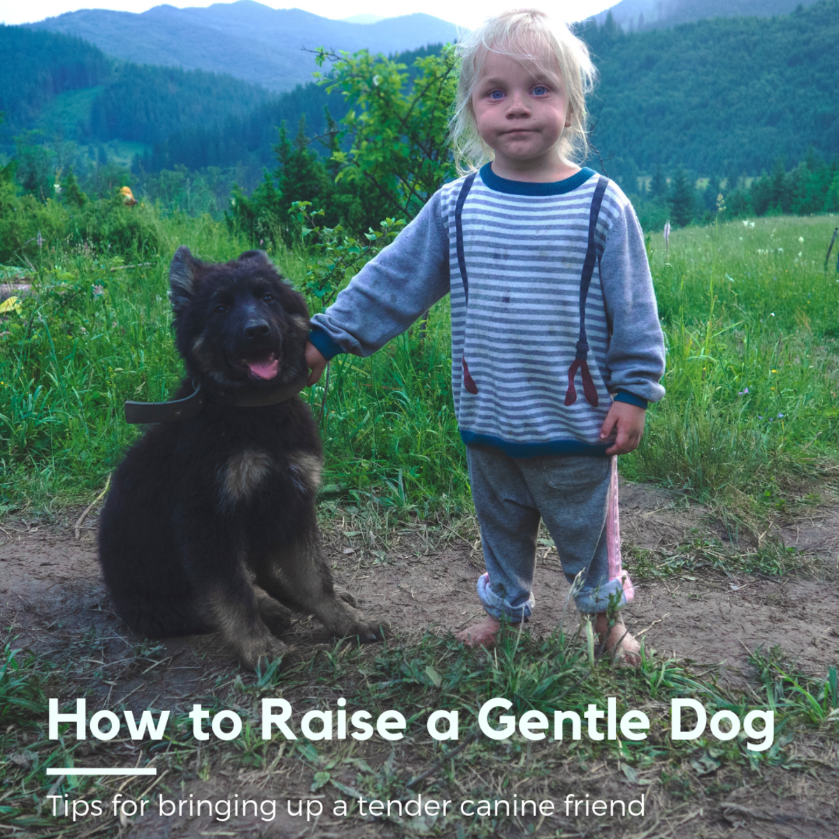 This article will break down our experience raising dogs with our children and offer up tips to raising gentle canines.