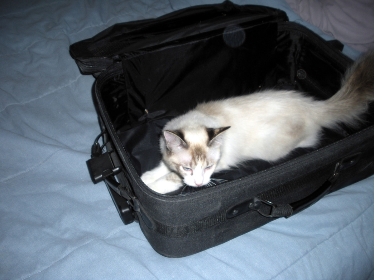 Step one:  remove cat from suitcase
