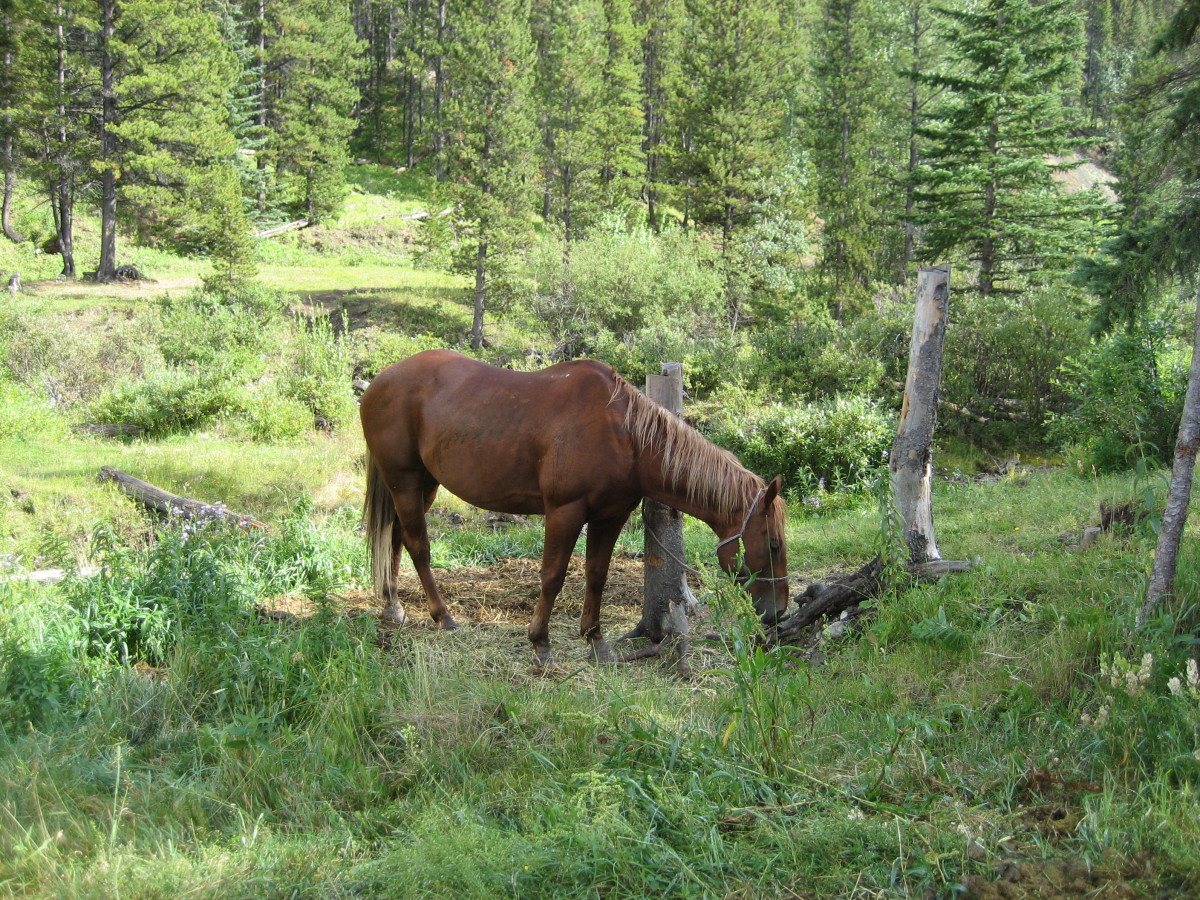 Trail horse relaxing
