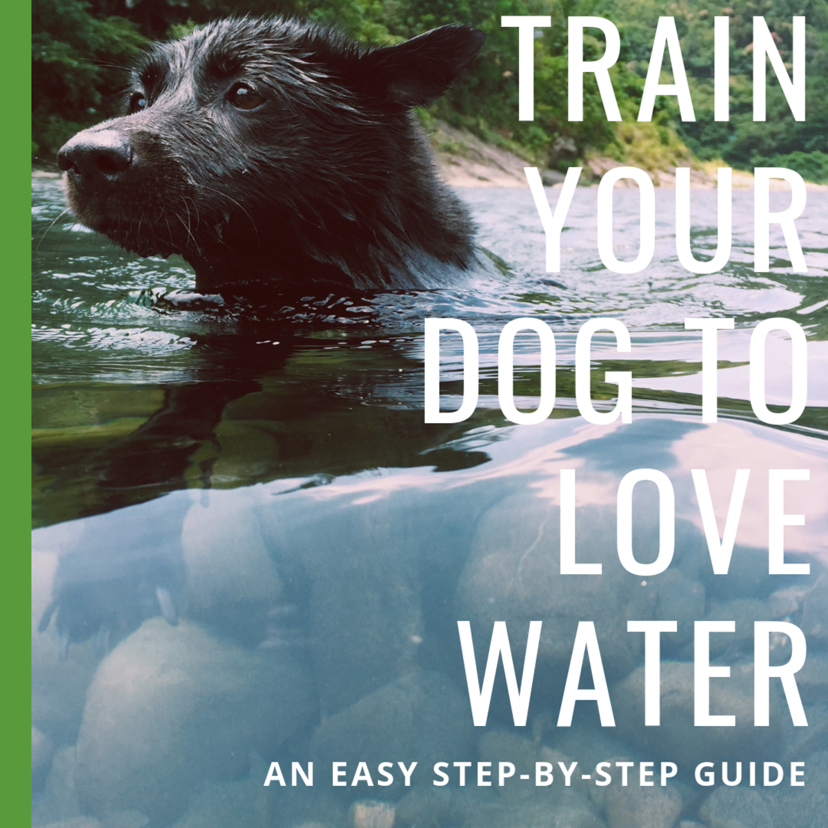 These steps will help your dog conquer his fear of the water.