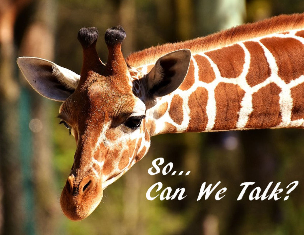 Do giraffes make sounds? This giraffe does.