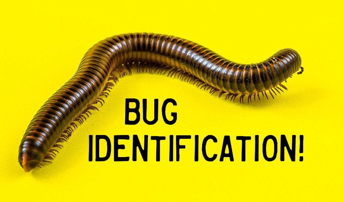 Bug Identification An Identification Guide To Insects And Other