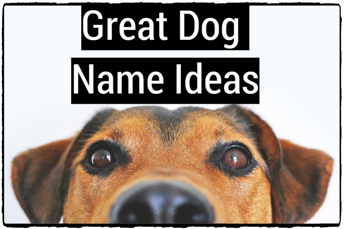 Great Dog Name Ideas
