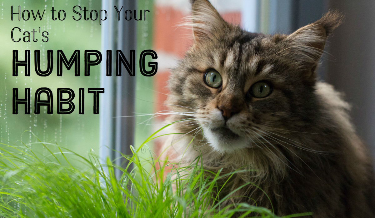 How Do I Stop My Cat From Humping