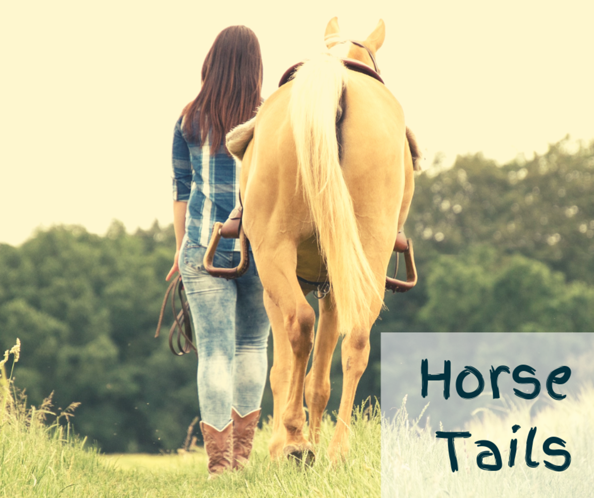 What's A Horses Tail For?