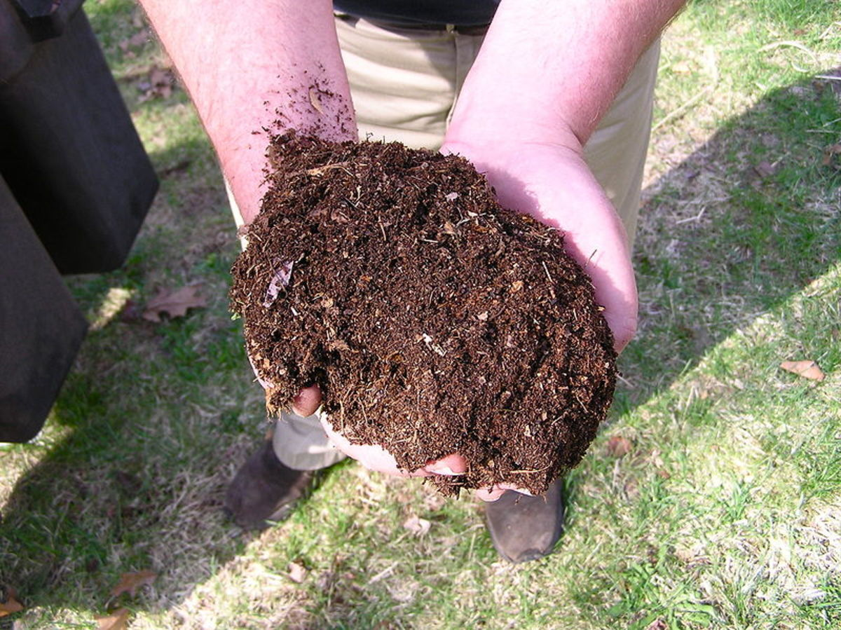 Composting Without a Compost Bin
