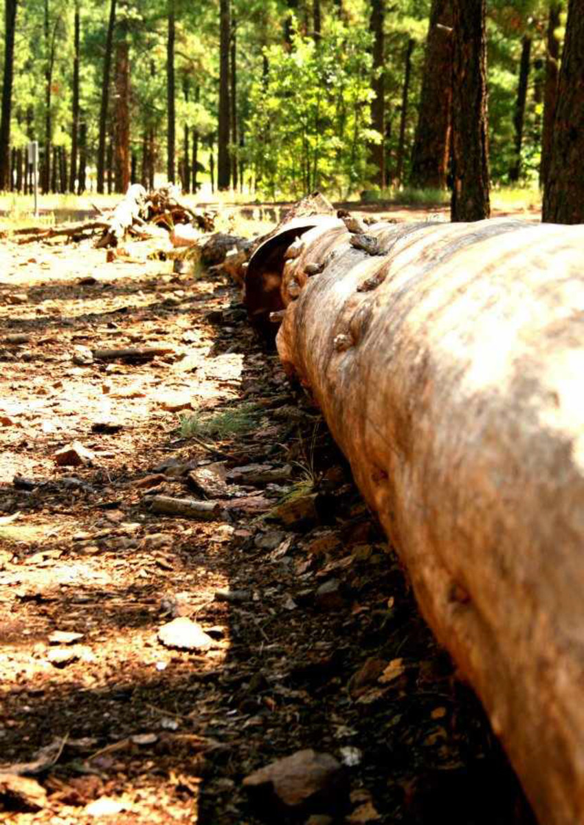 What is the best practice for forest management? Learn more about clear cutting and selective cutting.