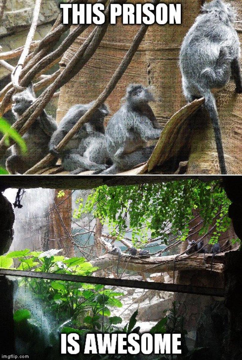 Monkey prison meme