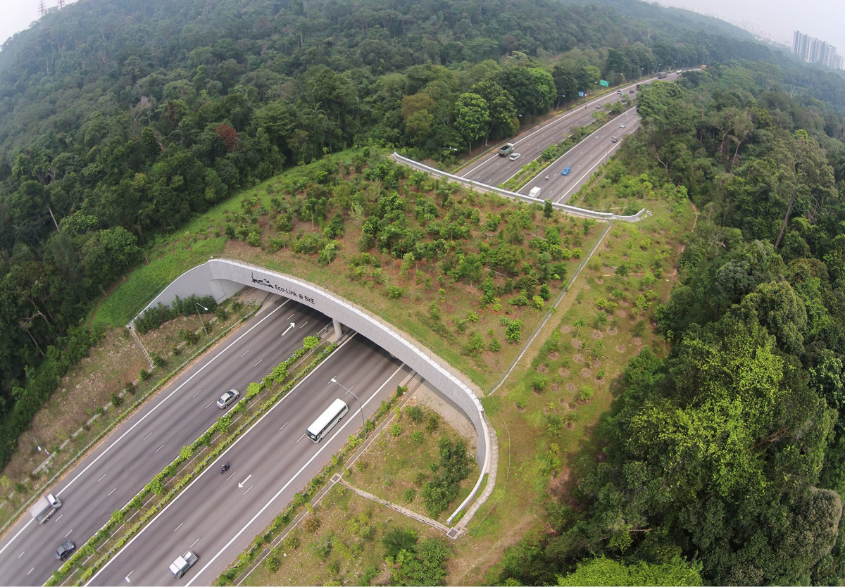 The 62 Km long eco-bridge in Singapore. Animals like pangolins, palm civet and squirrels have been seen traversing the eco link.
