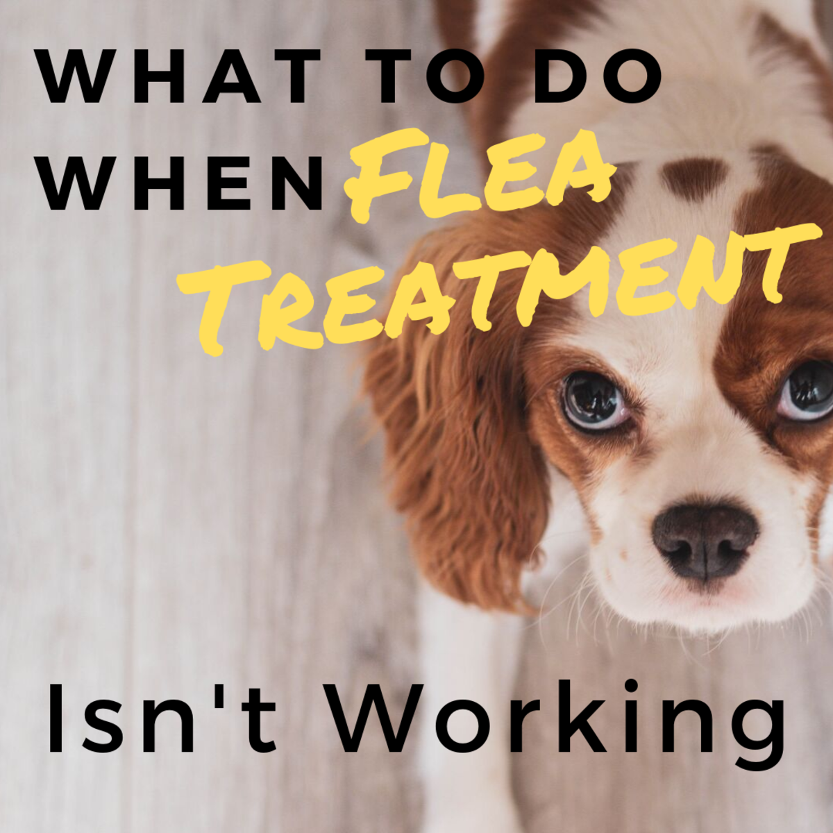 What to Do When Flea Treatment Isn't Working