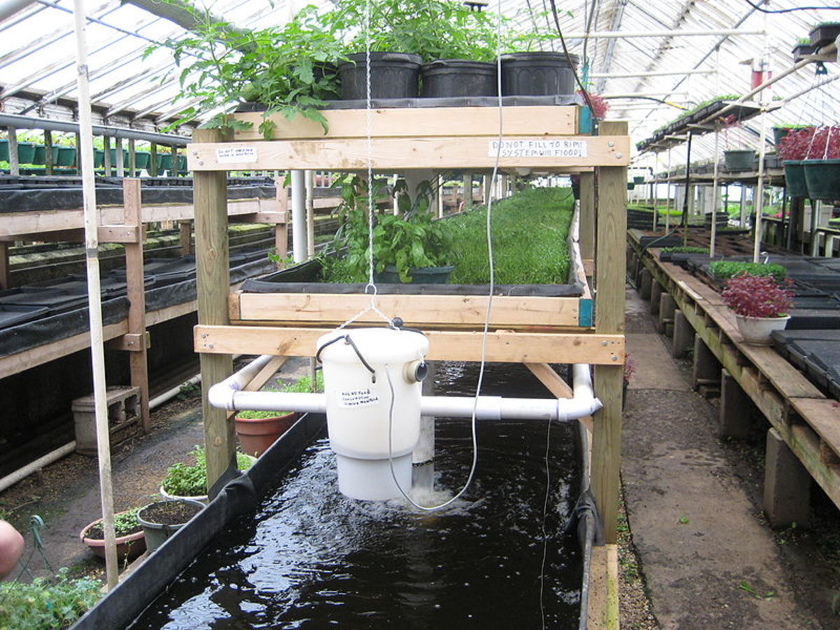 An aquaponics system at Growing Power urban farm in Milwaukee.