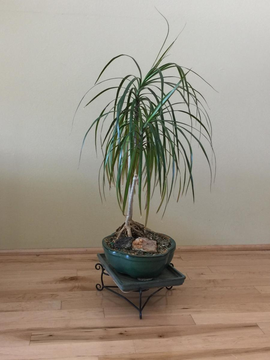 Rotating Houseplants Is Important but Often Overlooked