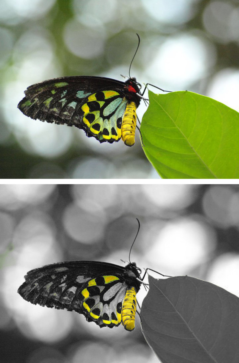 This method can make boring photographs into favorites by just highlighting one or two colors.