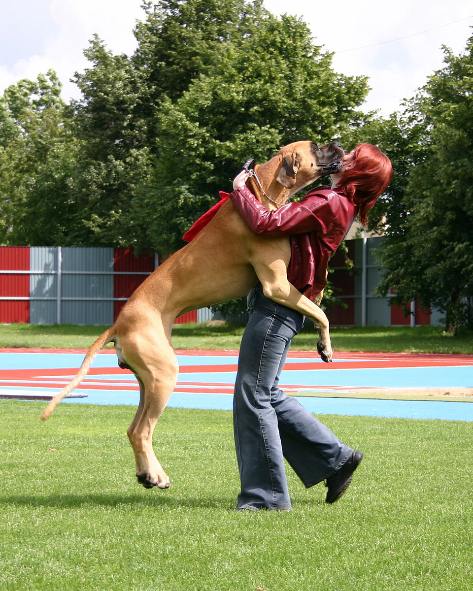 Dogs receive reinforcement to jump up on people from an early age.