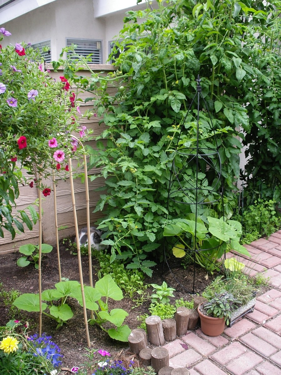 Squash, tomatoes, carrots, peas, radishes, spinach, basil and herbs -- it's amazing what you can do in a small area!