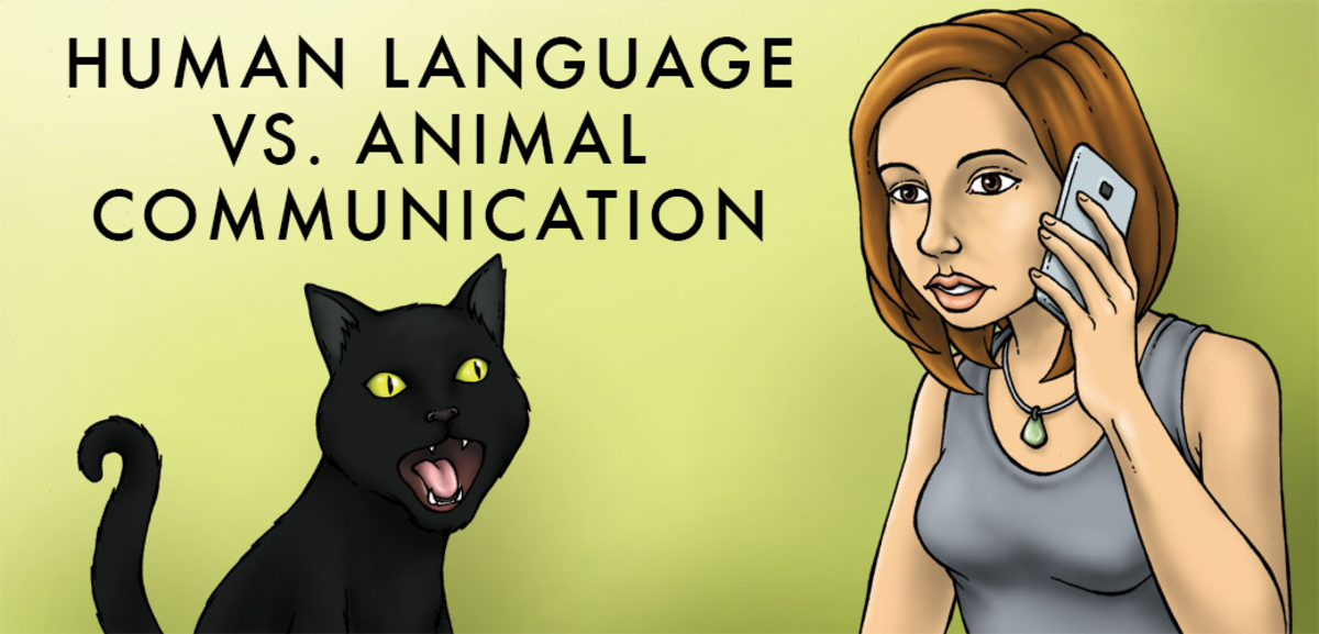 The Difference Between Animal and Human Communication