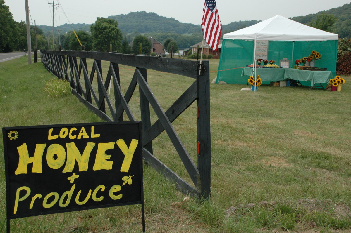 Honey Business: How to Raise Bees for Money