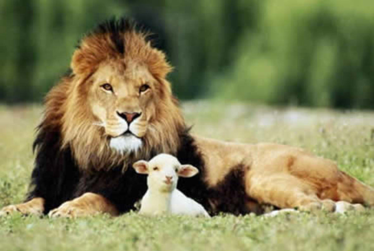 in-like-a-lamb-out-like-a-lion-a-poem