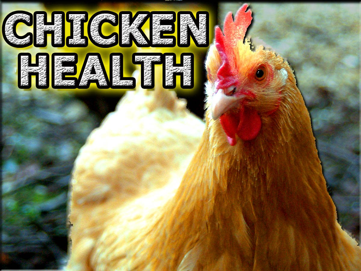 Keeping your chickens healthy is incredibly important.